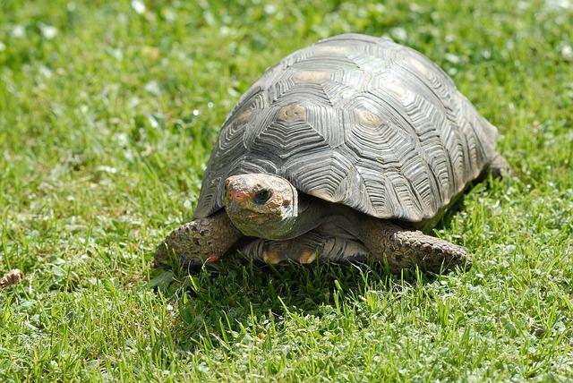 turtle-279399_640